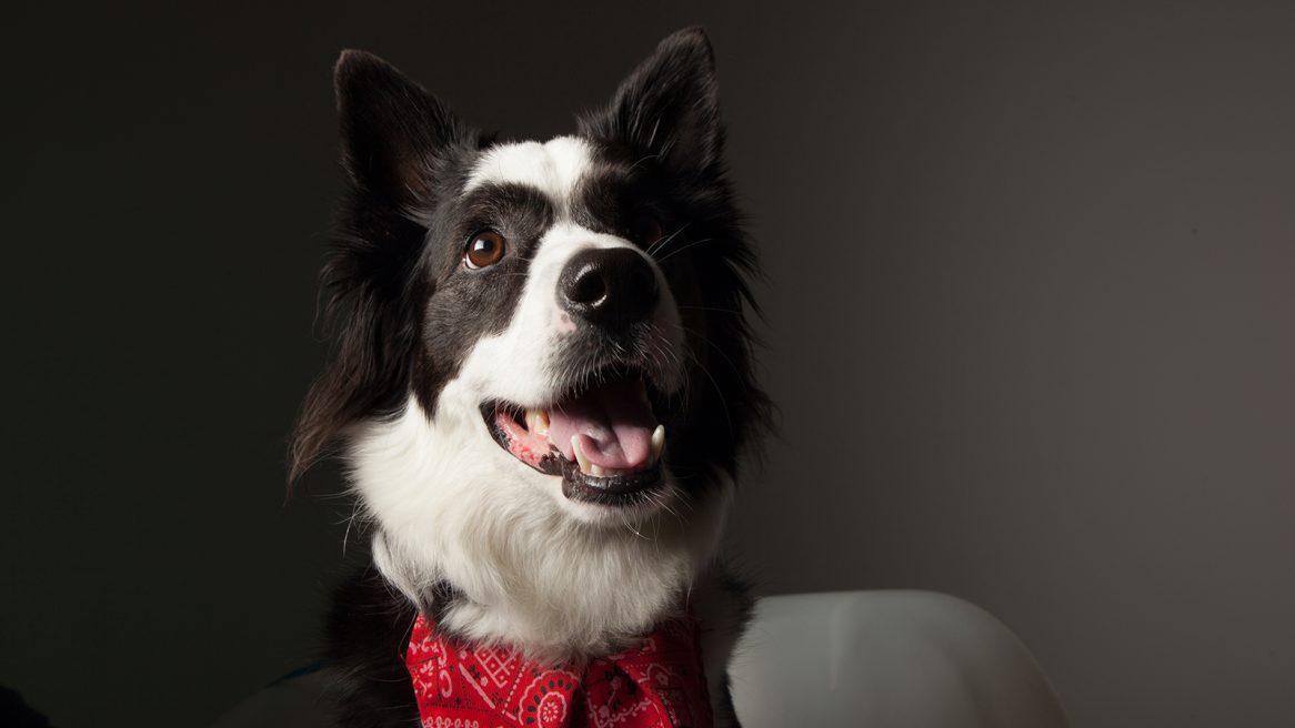 πορτραίτο του σκύλου